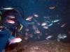 lestratit-medas-podwodne-5.jpg