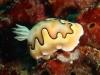 moalboal-nurkowanie-6