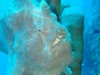 moalboal-nurkowanie-8