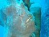 moalboal-nurkowanie-8_0