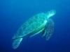 moalboal-nurkowanie-9