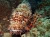mozambik-tofo-nurkowanie-3