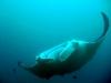 mozambik-tofo-nurkowanie-8