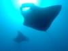 mozambik-tofo-nurkowanie-9