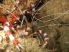 mozambik-tofo-nurkowanie-12