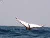 mozambik-tofo-nurkowanie-16