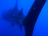 mozambik-tofo-nurkowanie-18