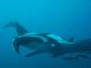 mozambik-tofo-nurkowanie-19