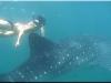 nurkowanie_kenia_diani_beach-10