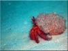 nurkowanie_kenia_diani_beach-21
