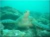 nurkowanie_kenia_diani_beach-23