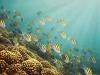 nurkowanie-w-emiratach-11