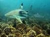 nurkowanie-w-emiratach-2