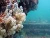 nurkowanie-w-emiratach-4