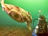 nurkowanie-w-emiratach-5