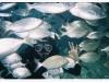 nurkowanie-marmaris-icmeler-1