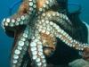 nurkowanie-marmaris-icmeler-10