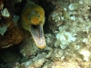 nurkowanie-marmaris-icmeler-3