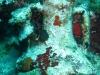 nurkowanie-marmaris-icmeler-5