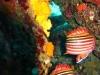 nurkowanie-marmaris-icmeler-8
