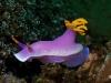 nurkowanie-na-palau-1