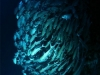 sipadan-nurkowanie-8