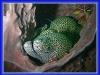 kenia-_malindi_-watamu1123
