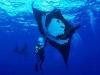 nurkowanie_kostaryka-3