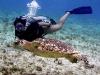 nurkowanie_kostaryka-4