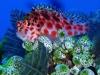 nurkowanie_malediwy-15
