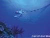 nurkowanie-na-palau-6