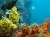 diving_3.jpg