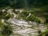 tarasy-ryzowe-filipiny-banaue-2