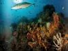 nurkowanie-raja-ampat-kri-island-10