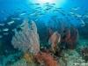nurkowanie-raja-ampat-kri-island-11