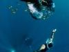 nurkowanie-raja-ampat-kri-island-7