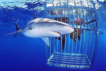 nurkowanie-w-klatce.jpg