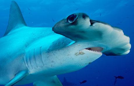 rekin-mlot.jpg