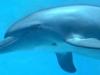 delfin.jpg