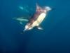 sardine-run-2