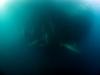 sardine-run-4