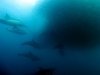 rpa-sardine-run-2