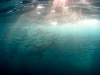 rpa-sardine-run-3