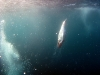 southafrica-sardine-run-1