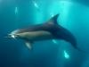 southafrica-sardine-run-2