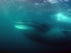 southafrica-sardine-run-4