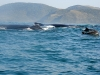 southafrica-sardine-run-5