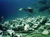 jolanda-reef.jpg