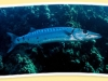 sharkobservatory1.jpg