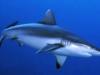 shark_r_sozzani.jpg